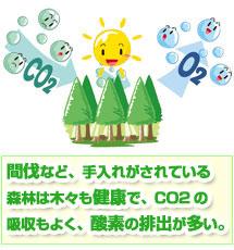 森林と二酸化炭素の関係